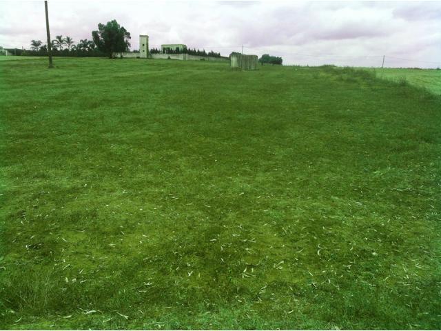 Terrain de 11 hectares à Sidi El Aidi