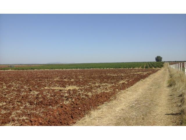 Terrain agricole 14 Ha