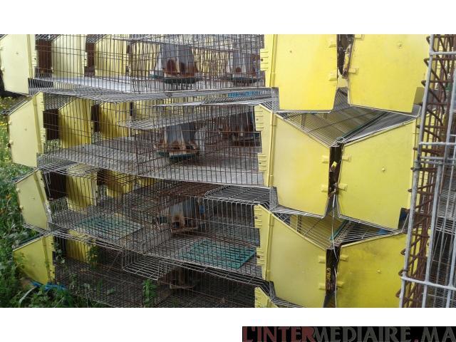 cages des lapins