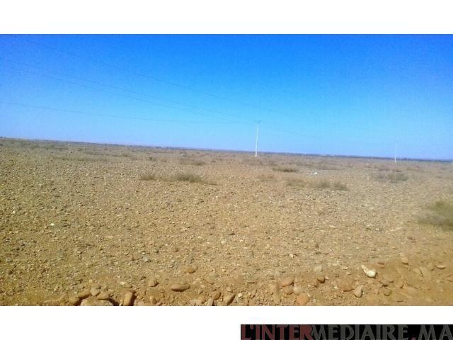 Terrain titré de 81 hectares à CHICHAOUA