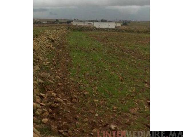 Terrain d'un hectare à région El Jadida