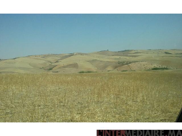 Terrain de 100 hectares meknes