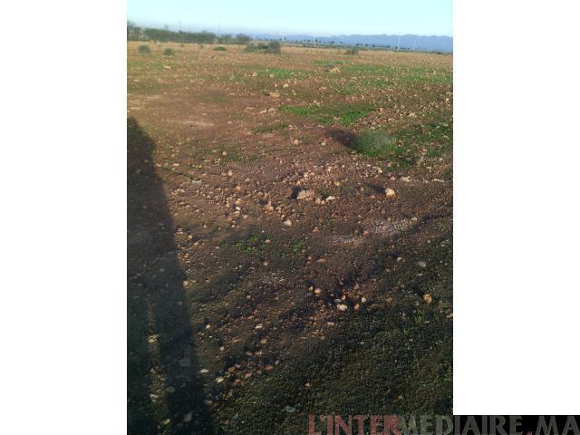 terrain de 4.5 hectard a 25 km de marrke