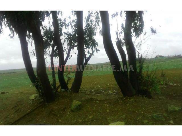 Terrain de 601 hectares à Khemissat