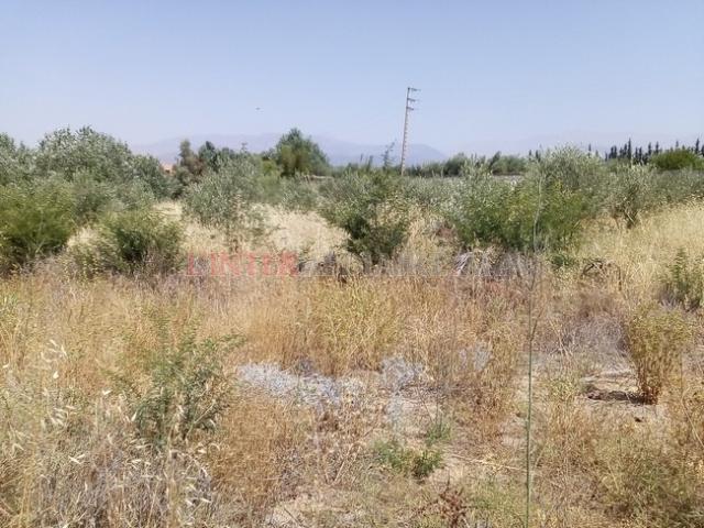 Terrain 3 ha à vendre route de l'ourika