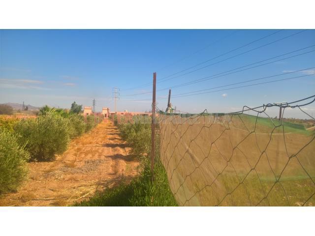 belle ferme titrée à 17 km de Marrakech