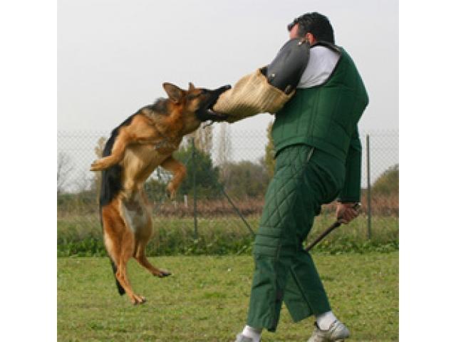 Dresseur des chiens