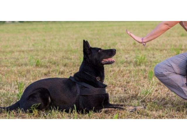 Dresseur éducateur canin